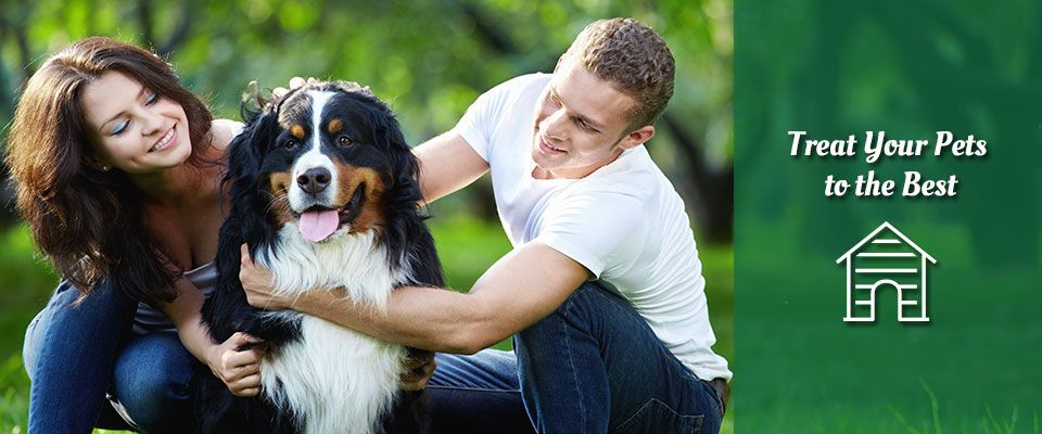 Treat your pets to the best - Couple with dog